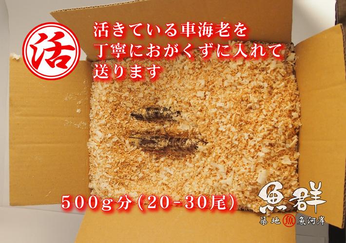 活け車海老 500g【国産】【冷蔵便】の通販・お取り寄せ「築地魚群」